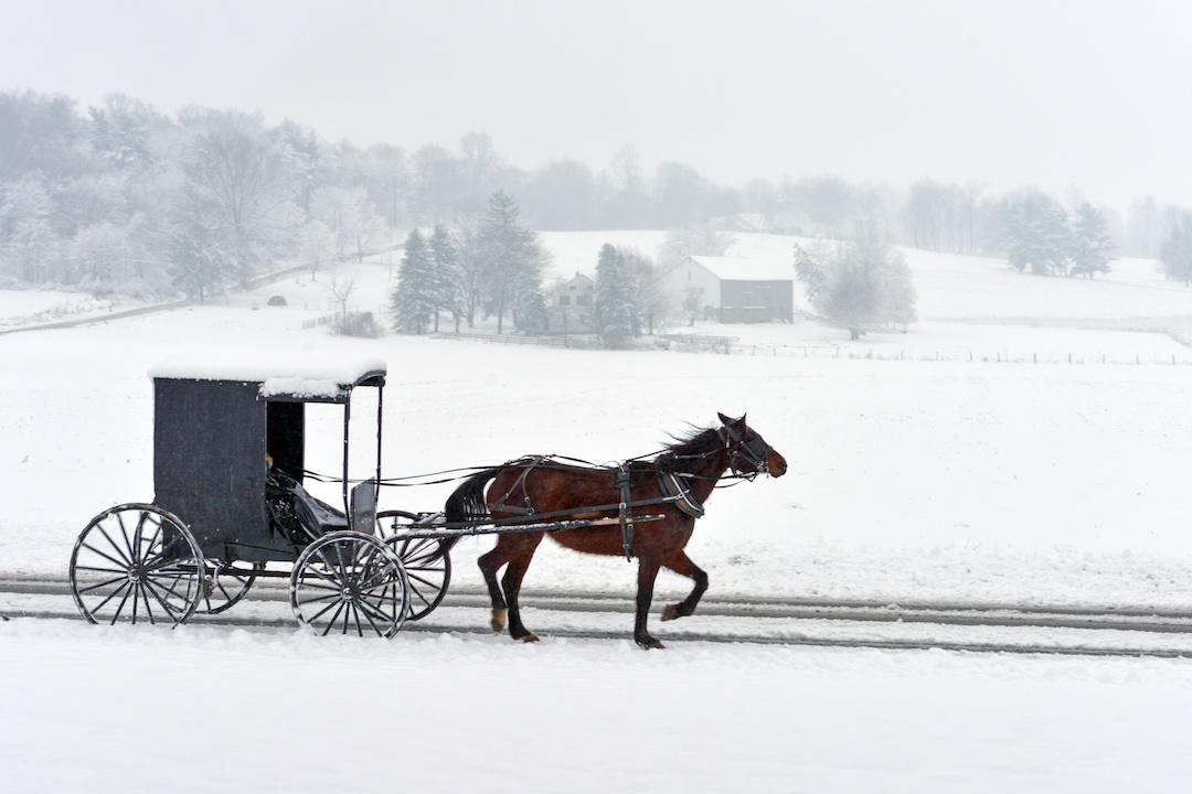 Horse and buggy being driven through the snow